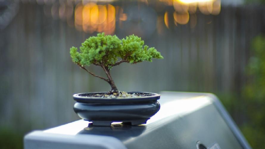 外壁塗装をする際の植木や盆栽の処置(養生)の仕方