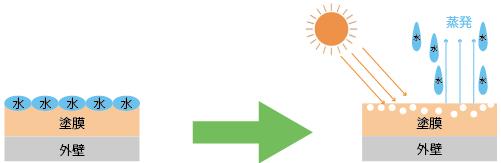 かぶり(白化)イメージ図